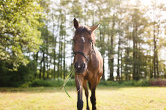 The horse feeding, close up Royalty Free Stock Images