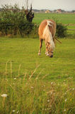 Horse feeding on grass Royalty Free Stock Image