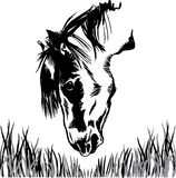 Horse feeding on grass illustration Stock Photo