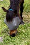 Horse feeding. Royalty Free Stock Photo