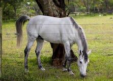 Horse feeding. Royalty Free Stock Photography