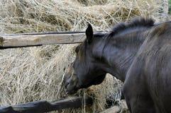 Horse feeding near the haystack Royalty Free Stock Photography