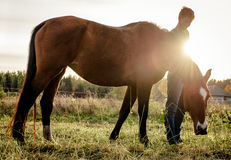 Horse feeding outdoors Stock Photography