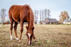 Horse feeding outdoors Stock Photos