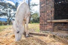 Horse feeding outside stable Stock Photo