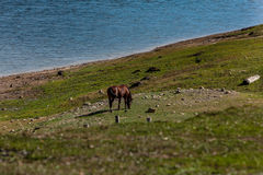 Horse feeding. Peacefull lake and wild horse Royalty Free Stock Photo