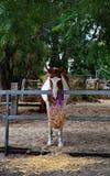 Horse feeding stock photo