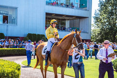 Horse and female Jockey getting ready for the race at Emerald Downs Stock Image