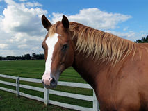 Horse by fence Stock Photography
