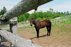 Horse and fence Royalty Free Stock Image