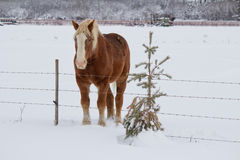 A horse beside a fence Stock Images