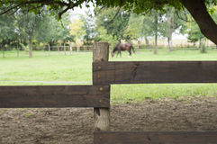 Horse fence Stock Images
