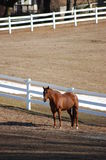 Horse by a Fence. Brown horse standing in fron of a white fence, with left over snow behind Royalty Free Stock Images