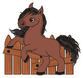 Horse and fence. Happy brown horse stand near the wooden fence Royalty Free Stock Photo