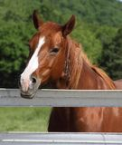 Horse at Fence Head Shot Royalty Free Stock Photography