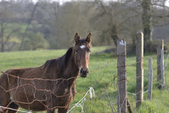 Horse Fence. Horse looking over fence in the French countryside Stock Photo