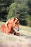 Horse on a field Stock Photography