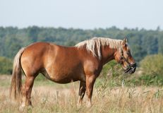Horse on the Field Stock Photo