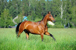 Horse in field Stock Images