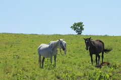 Horse and field Stock Images