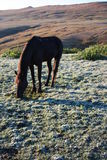 Horse in the field Stock Photography