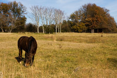 Horse in Field Stock Photos