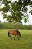 Horse on the field Stock Images
