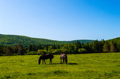 Horse Field. This is a beautiful landscape on a bright sunny day, with two chestnut brown horses that are main attraction stock photo