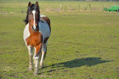 Horse in a field Royalty Free Stock Images