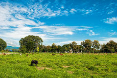 Horse in field. And blue sky Stock Photos