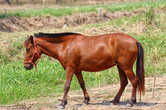 Horse on The Field Stock Photography