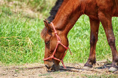Horse on The Field Stock Image