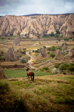 Horse in Field. Cappadocia, Turkey royalty free stock image