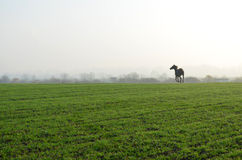 Horse in the field Stock Photo