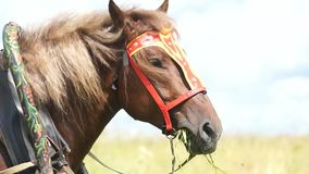Horse in the field, Country horse. Horse in the field on the grass background stock video
