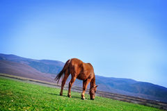 Horse on field Stock Photos