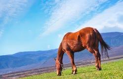 Horse on field Stock Photo