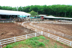 Horse field fence Stock Photos