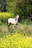 Horse in field of flowers Stock Photos
