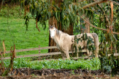 Horse in a field framed by trees Stock Photos
