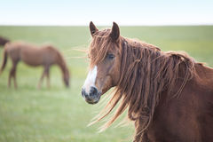Horse in field Stock Image