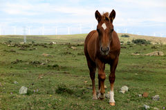 Horse in a field Stock Images