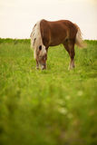 Horse on field Royalty Free Stock Photos