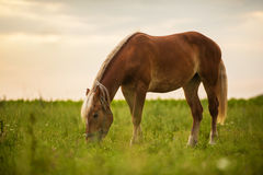 Horse on field Royalty Free Stock Images