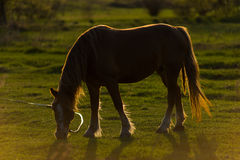 Horse on field Stock Photography