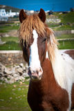 Horse in a field, portrait. Horse in a field, portrait orientation Stock Photo
