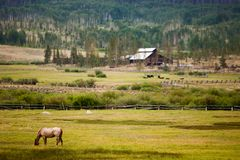 Horse on a ranch Stock Photo
