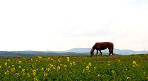 Horse and field Stock Photos