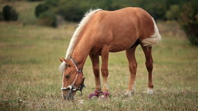 Horse in the field stock video footage