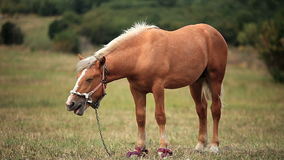 Horse in the field stock footage